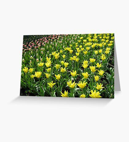 An Army of Tulips - Keukenhof Gardens Greeting Card