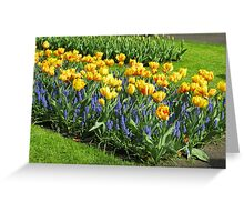 Bed of Tulips and Muscari - Keukenhof Gardens Greeting Card