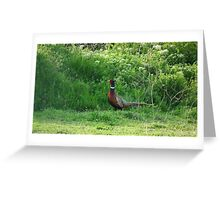 Vibrant Pheasant Greeting Card