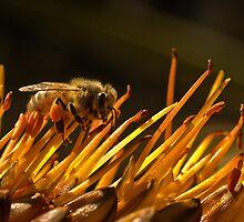 Packin' pollen by Celeste Mookherjee