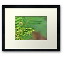 Any Green Thing Framed Print