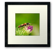 unknown beetle Framed Print