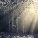 Sunbeams by ozzzywoman