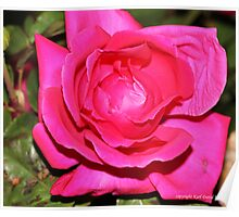 macro flora 026 Poster