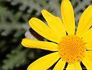 macro flora 028 by Karl David Hill