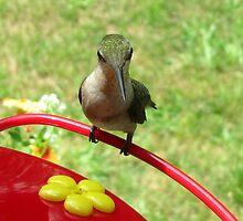 Alien!  (female Ruby Throat hummingbird) by Samohsong