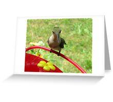 Alien!  (female Ruby Throat hummingbird) Greeting Card