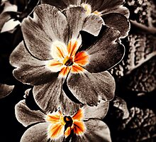 Slash of Coloured Flowers by TGrimson