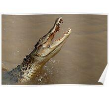 Salt Water Crocodile Poster