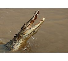 Salt Water Crocodile Photographic Print