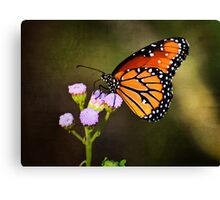 The Majestic Monarch Canvas Print