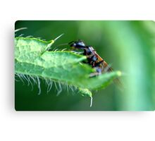 An Ant with Wings........... Canvas Print