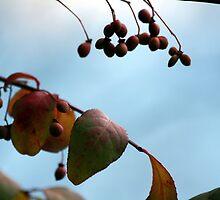 Winter Foliage by WDaRos714