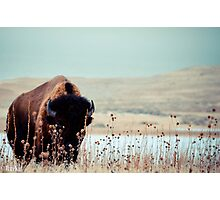 Tatanka Photographic Print