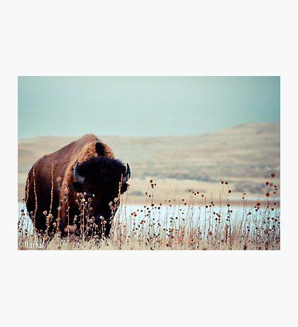 Tatanka Photographic Print