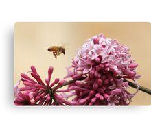 Buzzing Bee Canvas Print