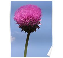 Sky Thistle Poster