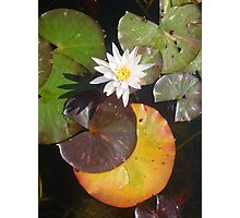 Tiny White Lily with coloured leaves Photographic Print