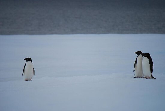 Penguin Family by cactus82
