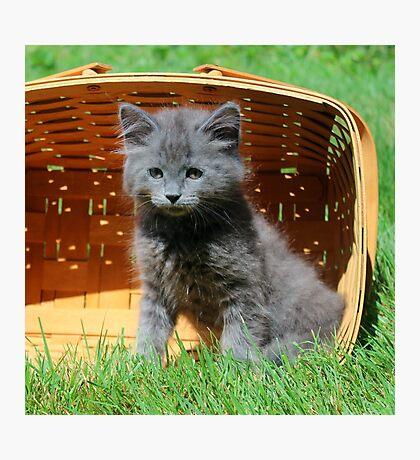 Grey Fluffy Kitten Photographic Print
