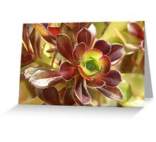 Aeonium with Spider Greeting Card