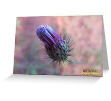Macro @ Garden Greeting Card
