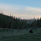 Bison Solitude #2 by Ken McElroy