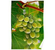 Green grape and vine leaves Poster