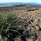 Parksville Beach - Grass, Sand and Beach by rsangsterkelly