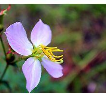 Meadow Beauty Photographic Print