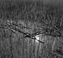 Reeds and Tree Branches by DavidHornchurch
