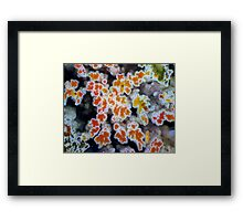 Autumn Colour Framed Print