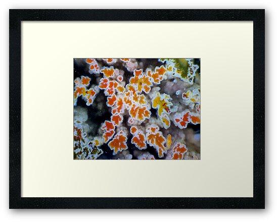 Autumn Colour by Stephanie Bateman-Graham