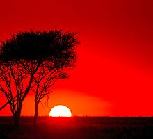 Sunset in the Serengeti by arodericks