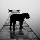 Misty morning by AntonAlberts