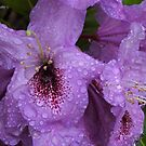 State Flower by DavesPhoto