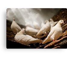 White Doves Canvas Print