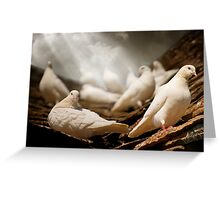 White Doves Greeting Card