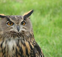 Long eared owl by Mcwiskin