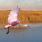 Roseate Spoonbill Flying Through The Salt Marsh by Kathy Baccari
