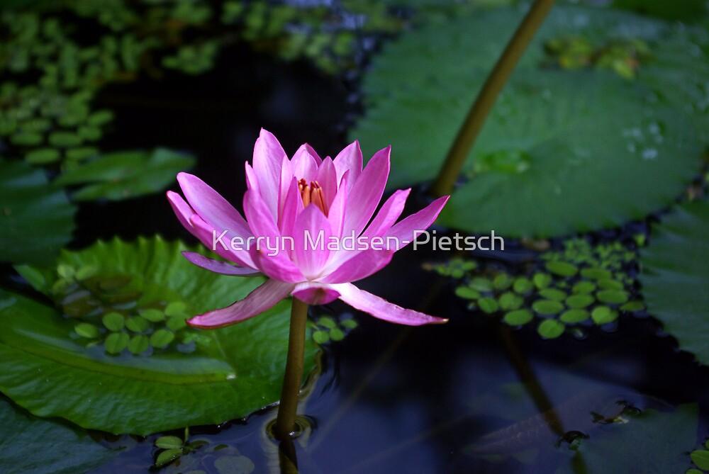 Arisen ~ Pink Water Lily by Kerryn Madsen-Pietsch