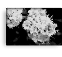 Life in Black and White Canvas Print