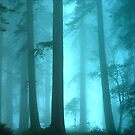 Redwood Trees In The Fog by Bob Christopher