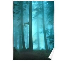Redwood Trees In The Fog Poster