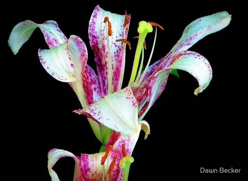 Beauty © by Dawn M. Becker