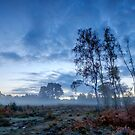 Predawn Mist on Wisley Common by Martin Griffett