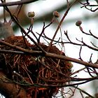 Bird's Nest by Stacy Brooks Photography