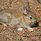 Baby Bunny by Dorothy Thomson