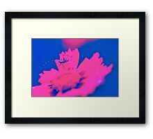 !Coreopsis POP! Framed Print