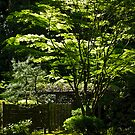 japanese gardens 2 by Bruce  Dickson